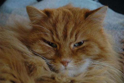 Mon chat Eliot